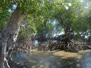 Ecosystem management - Mangroves are an integral part of ecosystems.