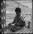 Manzanar Relocation Center, Manzanar, California. An evacuee is shown in the lath house sorting see . . . - NARA - 538031.tif