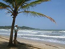 A palm tree at the beach.