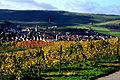Markelsheim beliebter Wein- un Erholungsort. im Herbst.jpg