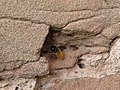 "May 6th ""Masonry Bee"" (2471763314).jpg"