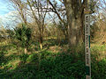 May Peace Prevail on Earth - City Park New Orleans.jpg