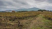 Mazet in vineyards. Cessenon-sur-Orb 01.jpg