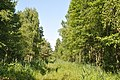 Meža ceļš, Babītes pagasts, Babītes novads, Latvia - panoramio (1).jpg
