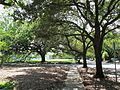 Menil Collection Grounds (5887504183).jpg