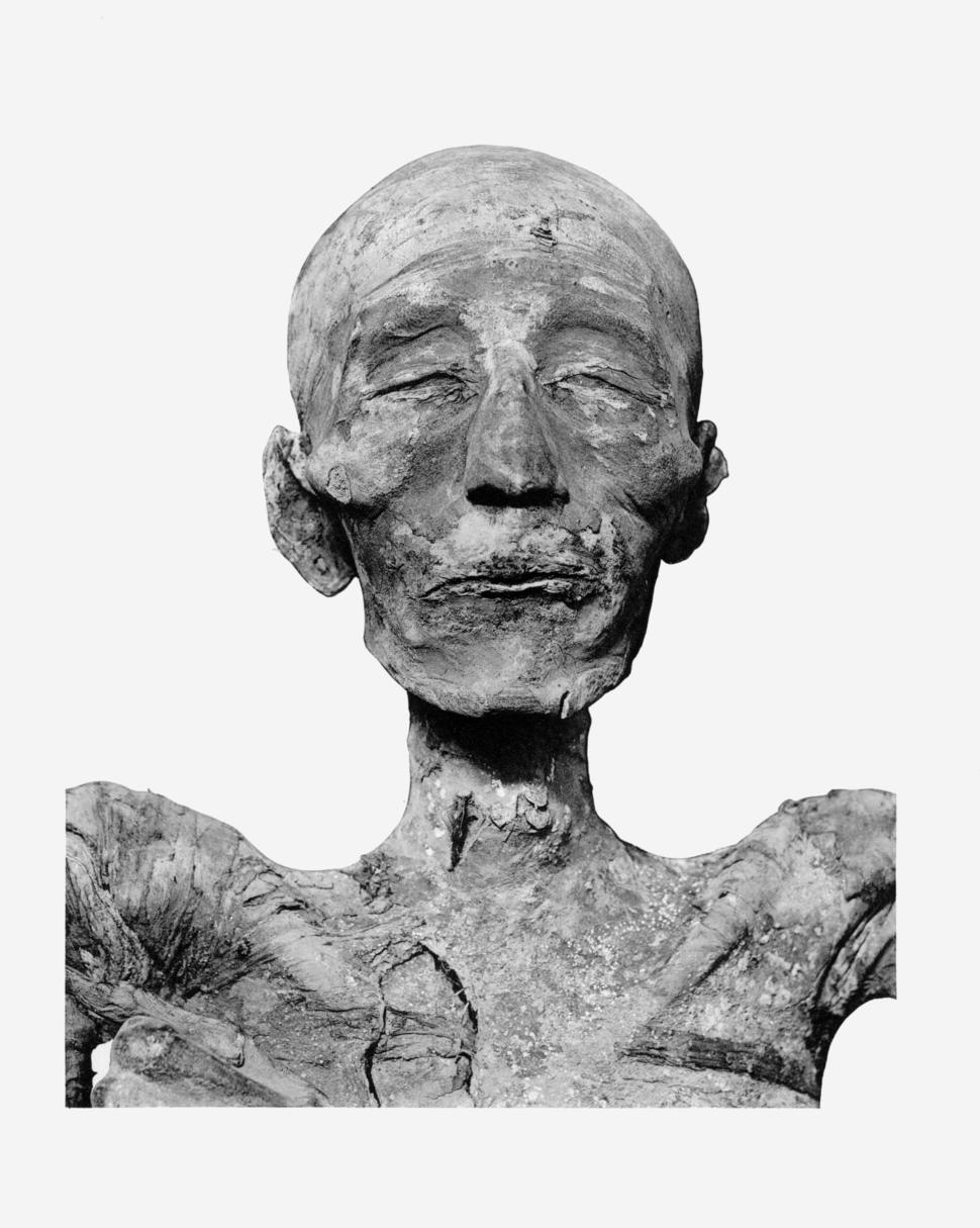 Merneptah mummy head