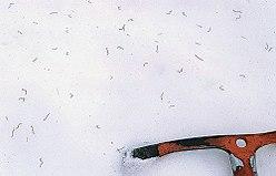 """plein de vers des glaciers, à la surface de la glace, dans la calotte glaciaire Stikine, en Colombie Britannique. (Clique sur l'image pour l'agrandir et voir les vers)"""""""""""