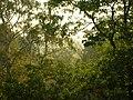 Mglisty poranek za oknem - panoramio.jpg