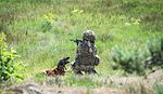 Military Working Dogs undergo Live Fire Tactical Training. MOD 45160270.jpg