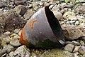 Military debris pondfield cove dorset01.jpg