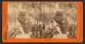 Mirror View, Yosemite Valley, Mariposa County, Cal, by Watkins, Carleton E., 1829-1916 3.png