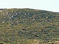 Molehills and rocks - geograph.org.uk - 699750.jpg