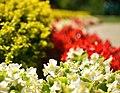 Mooreland Mansion Flowers (9462120480).jpg