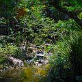 Morikami Museum and Gardens - Modern Romantic Garden - Creek and Lamp.jpg