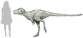 Moros intrepidus reconstruction.png