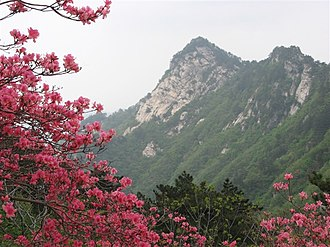 Macheng - Mount Guifeng with Azalea blooms in Macheng