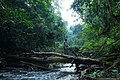Mount Nimba rainforest.jpg