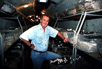 Zavidovići - Mushrooms cultivation in an anti-aerial bunker in Zavidovici,  1999. Development project financed by the Local Democracy Embassy at Zavidovici.