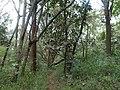 Nairobi Arboretum Park 20.JPG