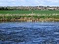 Nassington across a branch of the Nene - April 2014 - panoramio.jpg