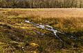 Nationaal Park Drents-Friese Wold. Locatie Dieverzand. Natte plek in een verruigde open plek in het bos 02.jpg