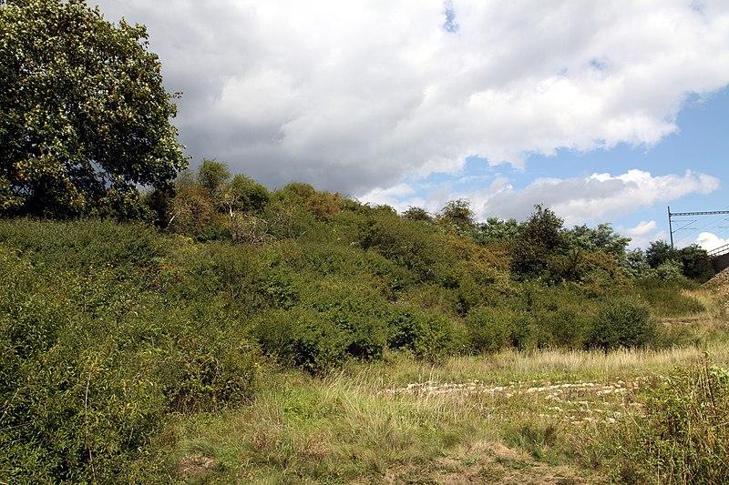 File:Natural monument Štěpánský rybník in 2014 (2).JPG