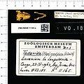 Naturalis Biodiversity Center - ZMA.MAM.11165.a pal - Mops condylurus - skull.jpeg