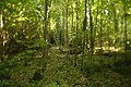 Naturdenkmal Dolinenketten Oberer Wald (4 Dolinen), Kennung 81150100016 07.jpg