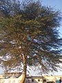 Nature 14.jpg