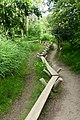 Nature Trail at the WWT Wetland Centre.jpg