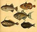 Naturgeschichte in Bildern mit erläuterndem Text (Taf. XVI) (6059205414).jpg