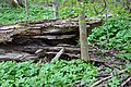 Naturschutzgebiet Chemnitzaue bei Draisdorf. 3.jpg