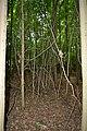 Naturschutzgebiet Haseder Busch - Im Haseder Busch (30).jpg