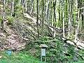 Naturwaldzelle Brandhagen (farnreicher Zahnwurz-Buchenwald, montaner Hainsimsen-Buchenwald). Die forstliche Nutzung wurde 1975 eingestellt. - panoramio.jpg