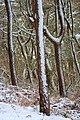 Newton Wood - geograph.org.uk - 1147104.jpg