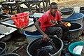Nigerian Fish sellers (12).jpg