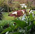 Ninfa Garden Plants.JPG