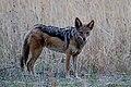 Nkomazi Game Reserve, South Africa (22626836286).jpg
