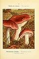Nouvel atlas de poche des champignons comestibles et vénéneux (Pl. 17) (6459629619).jpg