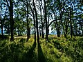Oak Island - panoramio.jpg