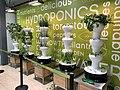 Oaks Hydroponics 2.jpg