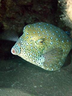 En el acuario - 5 7