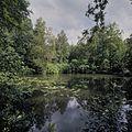 Overzicht van de vijver - Vaassen - 20424441 - RCE.jpg