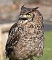 Owl 3d (5512274612).jpg