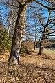 Pörtschach Winklern Quellweg Eichen am Wanderweg NW-Ansicht 12012020 8044.jpg