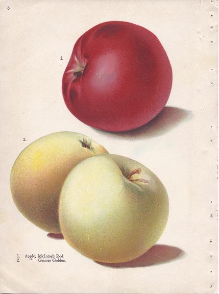 File:Page 6 apple - McIntosh Red, Grimes Golden.tiff