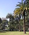 Palmeras del Parque O´Higgins, Santiago de Chile - panoramio.jpg