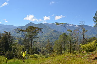 New Guinea Highlands Natural region in New Guinea