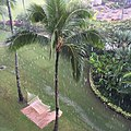 Paradise in the rain. Iphone 6. (14911340533).jpg