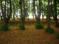 Park Dranske-Lancken - Senke 1.jpg